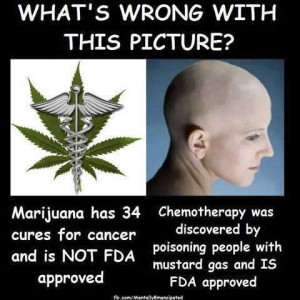 ... marijuana as the new herbalism, part 2: Cannabis does not cure cancer