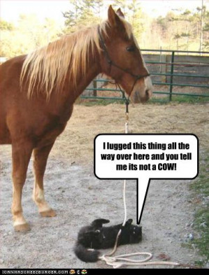 funny horse and cat, funny horse lol pictures