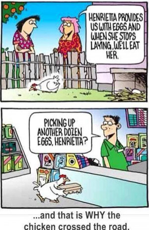Chicken are more clever that you think…