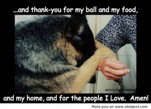 And Thank-You For My Ball And My Food, And My Home. And For The People ...