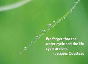 We Forget That The Water Cycle And The Life Cycle Are One