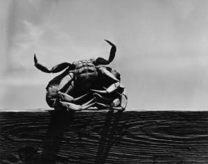 Aaron Siskind: Gloucester , 1944