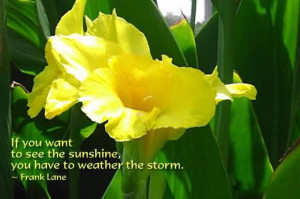 If You Want To See The Sunshine, You Have To Weather The Storm