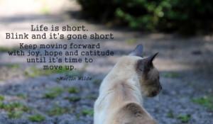merlin-cat-quote-life-is-short-510x298.jpg