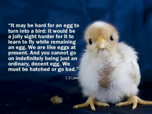 ... -egg-quote-hatched-or-go-bad-personal-development-quote-650x487.jpg