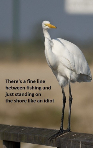 Steven wright, quotes, sayings, bird, funny, humorous