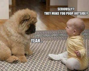 Baby to puppy they make you poop outside Funny dog photo with captions