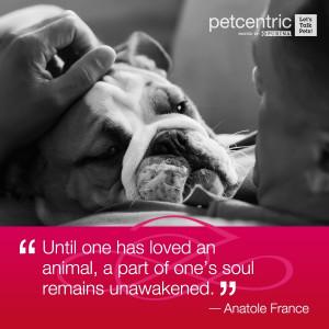 English Bulldog ~ Pet Quote