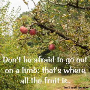 Don't be afraid to go out on a limb, that's where all the fruit is ...