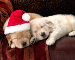-quotes-sayings-wallpaper-christmas-pet-hd-wallpapers-merry-christmas ...