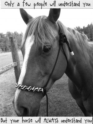 Horse Quotes And Sayings Horse quotes