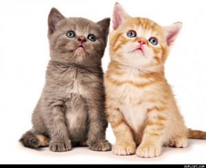 Exquisite Roflcat Funny Cat