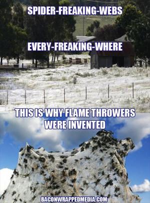 funny spider webs