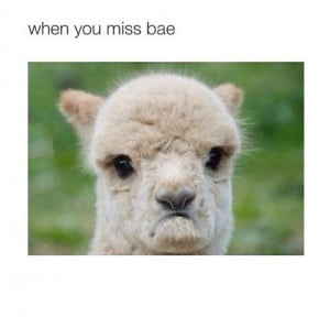 when you miss bae