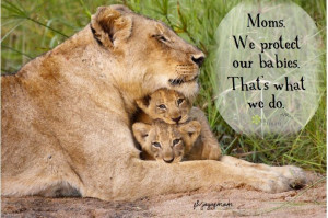 Mothers protect ....