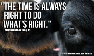 Abused Animals Quotes King jr. and animal rights