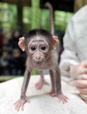 Cute Baby Monkey Taking Bath