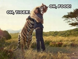 Cute Tiger Funny Pictures