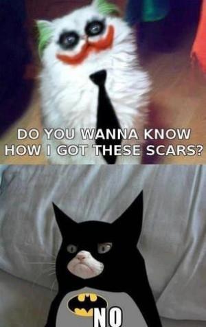 Joker vs. Batman ~ Funny Cats - cats Photo