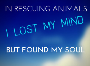 Inspirational Animal Rescue Quotes In rescuing animals, i lost my