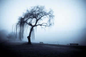 Old Foggy Weeping Willow