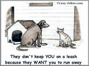 Dog and Cat Humor