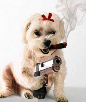 http://www.coolgraphic.org/animal/dog/dog-with-gun/