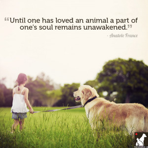 Quotes About Pets And Love...