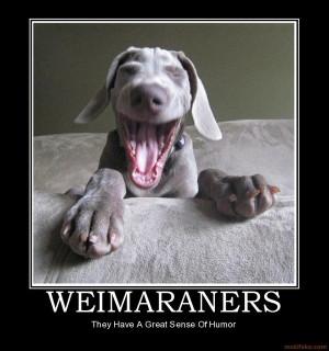 Art weimaraners dogs