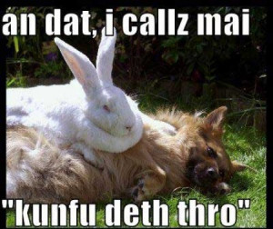 Funny rabbit sayings pictures
