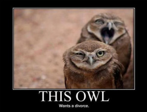 Owl funny