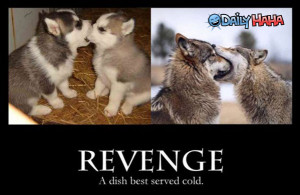 ... funny picture cold funny cold cat funny picture funny girl cold feet