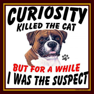 Curiosity killed the dog not the cat