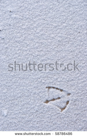 loneliness bird footprints on the snow background - stock photo