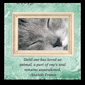 Cat Sympathy Cards