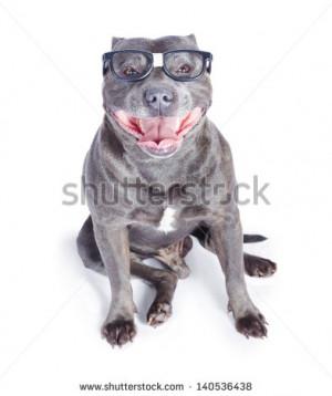 Stock Photo English Bulldog Wearing Reading Glasses With Tongue