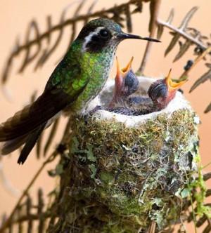 Mother Bird and Babies