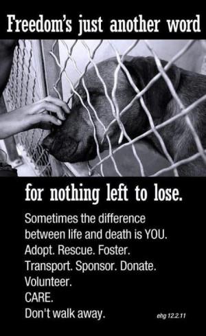 rescue a dogAnimal Rescue, Walks, Friends, Life, Dogs Cat, Make A ...