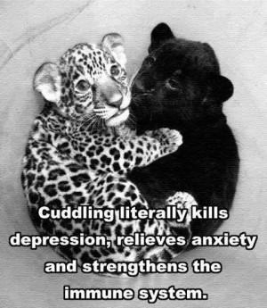 cuddling quotes cute animals quote cuddling