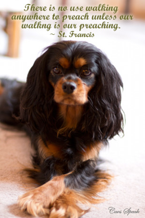 notes #Cavalier King Charles Spaniel #dog #quotes
