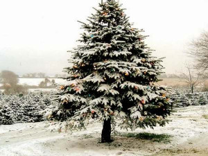 Posts related to christmas tree quotes and sayings