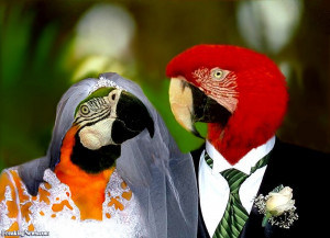 Parrot Wedding - pictures