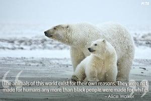 Polar Bear Quotes