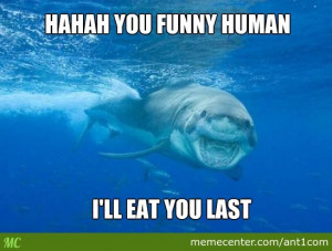 Related Pictures funny shark sayings 13
