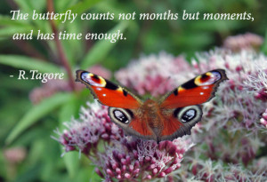 The butterfly counts not months but moments,