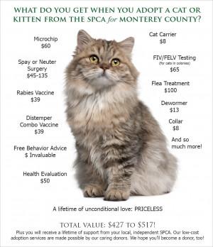 Cat Adoption Value