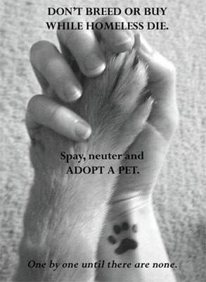Animal Rights - animal-rights Photo