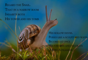 OC} The Snail motivational inspirational love life quotes sayings ...