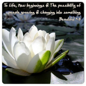The meaning to the lotus; to life, new beginnings & the possibility of ...