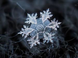 Awe-Inspiring Macro Photography of Individual Snowflakes